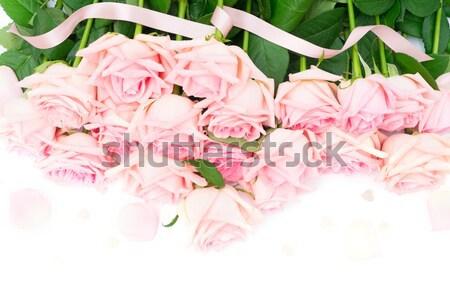 Różowy róż świeże granicy odizolowany Zdjęcia stock © neirfy