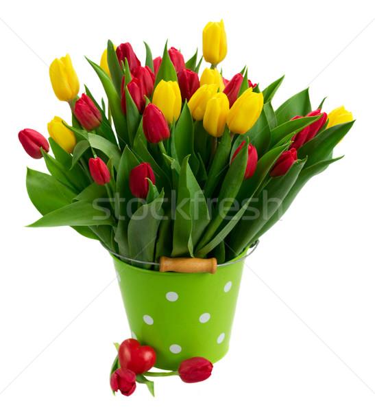 Ramo amarillo púrpura rojo tulipanes frescos Foto stock © neirfy