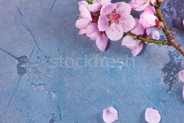 Roze kersenbloesem bloemen frame grijs Blauw Stockfoto © neirfy