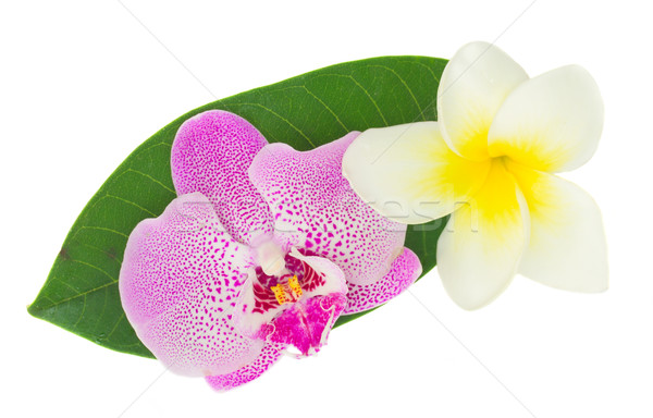pink  orchid and frangipani  Stock photo © neirfy
