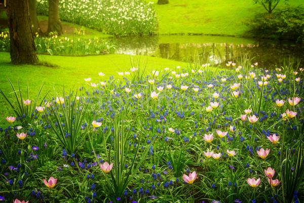 Różowy staw wiosną ogród Holland retro Zdjęcia stock © neirfy