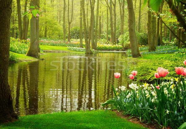 spring garden Keukenhof, Netherlands Stock photo © neirfy