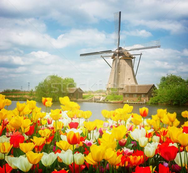 Holland szélmalom tulipánok mező színes napos idő Stock fotó © neirfy