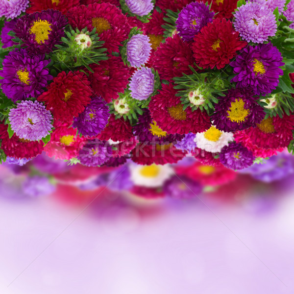 border of fresh aster flowers on bokeh background Stock photo © neirfy