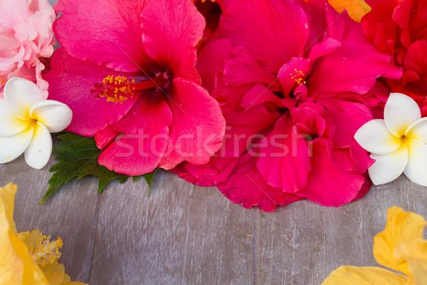 Renkli ebegümeci çiçekler etiket çerçeve ahşap Stok fotoğraf © neirfy