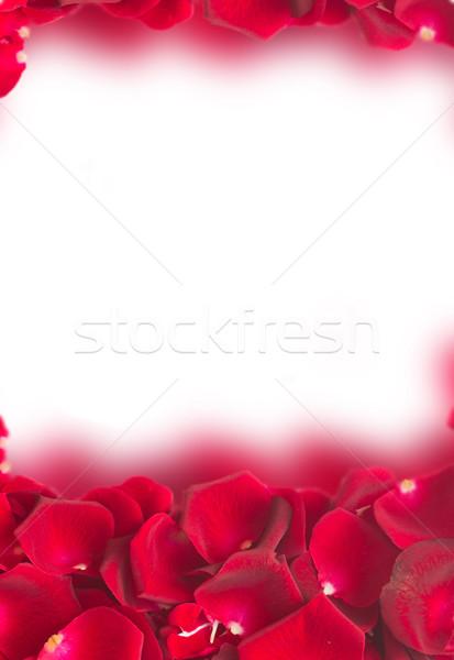frame of dark  red rose petals Stock photo © neirfy