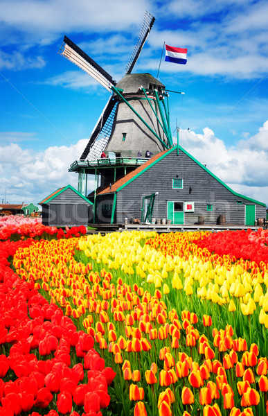 Nederlands wind traditioneel windmolen Nederland retro Stockfoto © neirfy