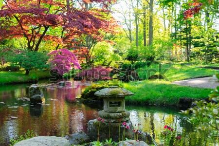 Japoński ogród wiosną drzewo charakter krajobraz Zdjęcia stock © neirfy
