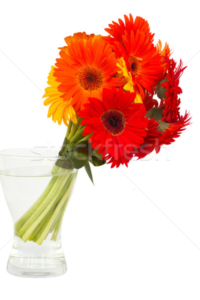 gerbera flowers posy  in vase Stock photo © neirfy
