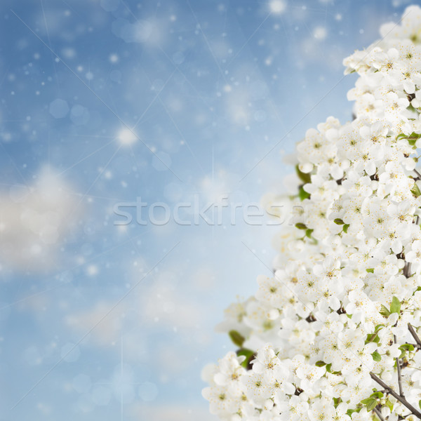 Blossoming Plum Flowers on sky Stock photo © neirfy
