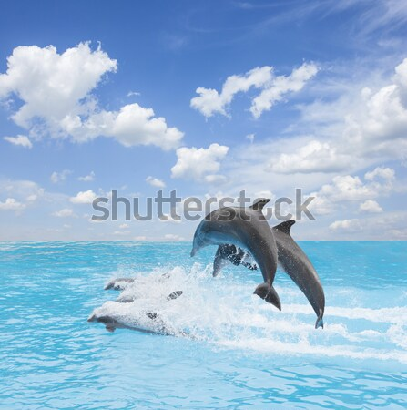 two  jumping dolphins Stock photo © neirfy