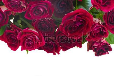 Sınır taze leylak rengi güller cam vazo Stok fotoğraf © neirfy