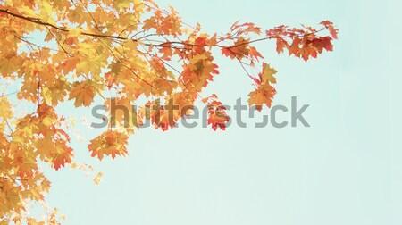 Automne laisse cadre jaune orange blanche Photo stock © neirfy