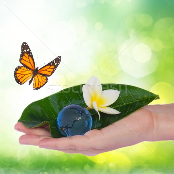 Kéz tart zöld levél Föld ökológia megőrzés Stock fotó © neirfy
