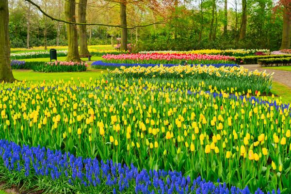 Stock photo: Formal spring garden