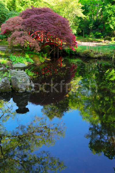 japanese garden in The Hague Stock photo © neirfy