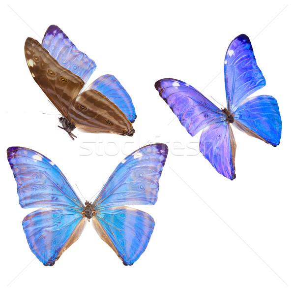 Blauw vlinder ingesteld ijs geïsoleerd witte Stockfoto © neirfy