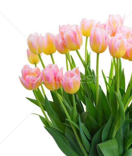 Ramo tulipanes frescos rosa amarillo hojas verdes Foto stock © neirfy