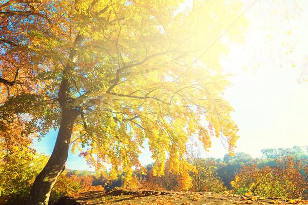 Vibrant fall foliage Stock photo © neirfy