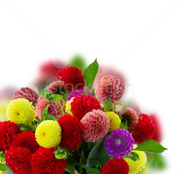 Dahlia flowers bouquet Stock photo © neirfy