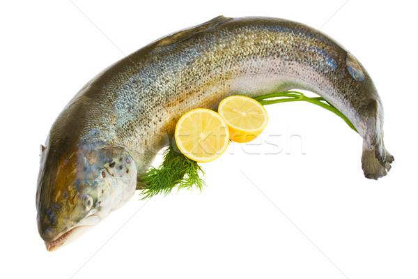 Atlantic Salmon Stock photo © neirfy