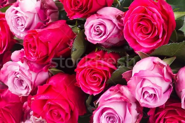 dark and light  pink roses  on table Stock photo © neirfy