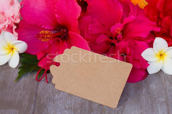 colorful hibiscus flowers with tag Stock photo © neirfy