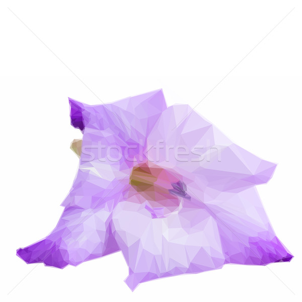 Low poly gladiolus flowers Stock photo © neirfy