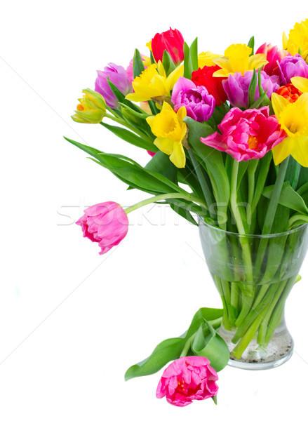 Buquê tulipas narcisos fresco rosa roxo Foto stock © neirfy