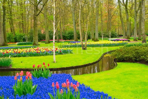 Hivatalos tavasz kert színes zöld fű fa Stock fotó © neirfy