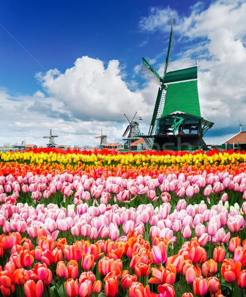 Dutch wind mills Stock photo © neirfy