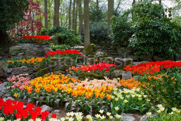 spring garden Keukenhof, Holland Stock photo © neirfy