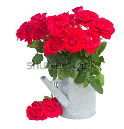 bouquet  of scarlet roses in vase Stock photo © neirfy