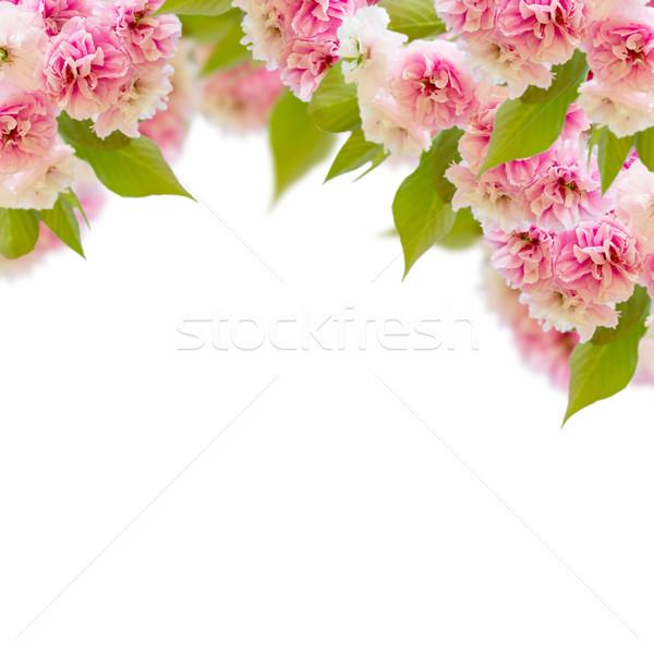 Blossoming cherry tree   Flowers Stock photo © neirfy