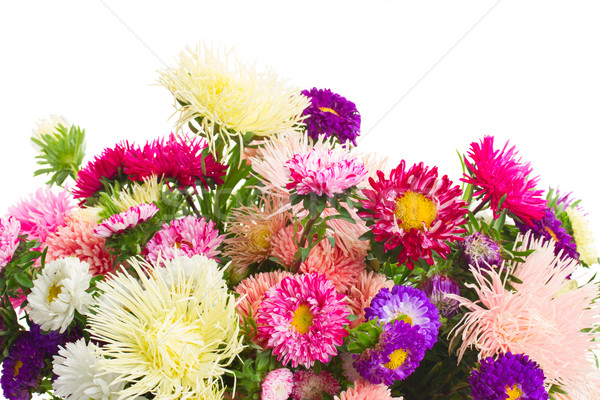 aster flowers Stock photo © neirfy