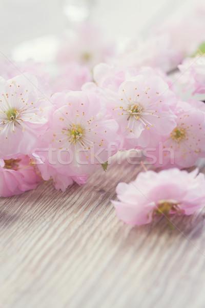 Roz cireş flori proaspăt masa de lemn retro Imagine de stoc © neirfy