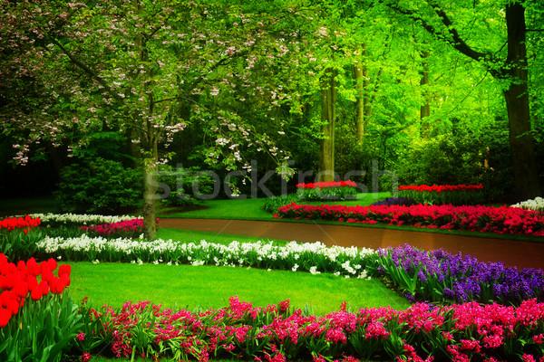Primavera giardino Holland colorato prato Foto d'archivio © neirfy