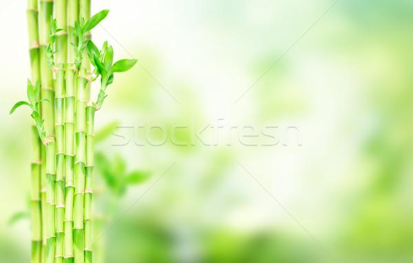 Grünen Bambus zunehmend frischen Blätter Kopie Raum Stock foto © neirfy