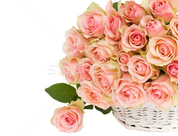 Ramo rosa rosas cesta aislado blanco Foto stock © neirfy