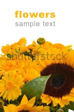 marigold and sunflowers Stock photo © neirfy