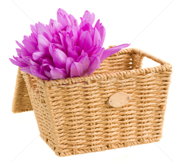 basket with meadow saffron isolated on white Stock photo © neirfy
