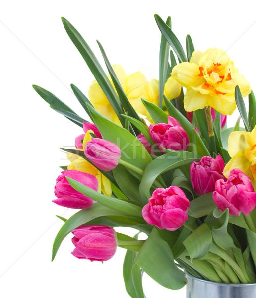Ramo rosa tulipanes amarillo narcisos aislado Foto stock © neirfy