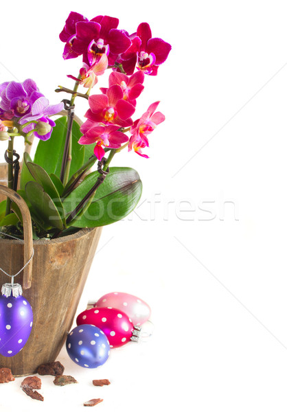 Tavasz ibolya orchideák húsvéti tojások izolált fehér Stock fotó © neirfy
