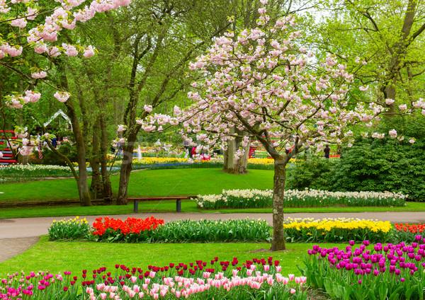 весенние цветы Голландии парка весны дерево Сток-фото © neirfy