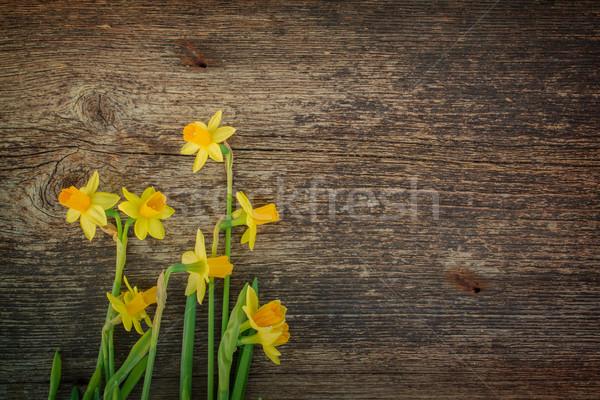 水仙 木製 新鮮な 春 黄色 ストックフォト © neirfy