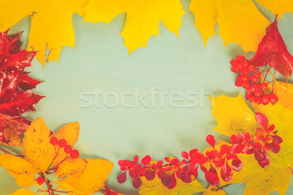 Fall leaves on blue Stock photo © neirfy
