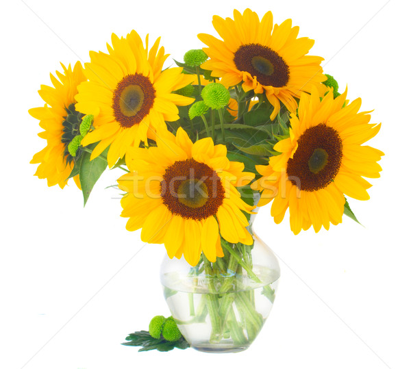 one bight sunflower Stock photo © neirfy