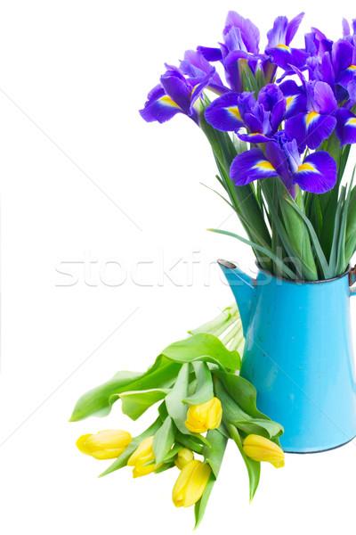 Bahar lale sarı mavi pot Stok fotoğraf © neirfy