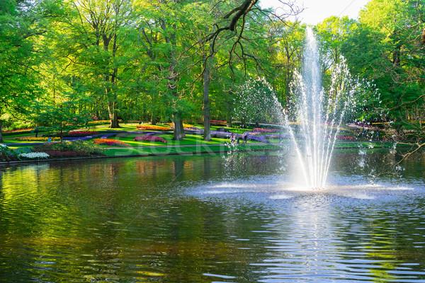 ストックフォト: 春 · 池 · 公園 · 新鮮な · 緑 · 木