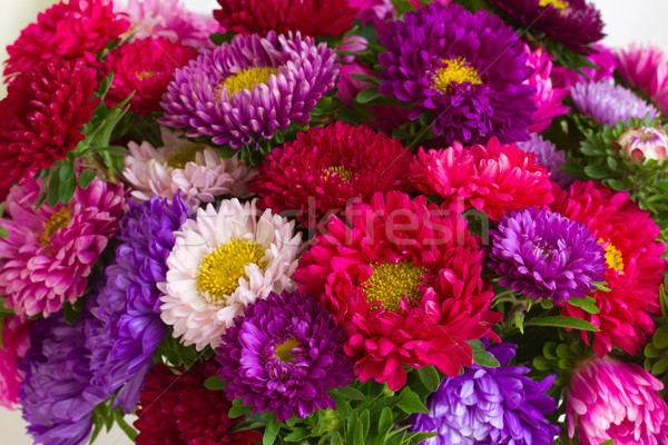 autumn aster flowers background Stock photo © neirfy